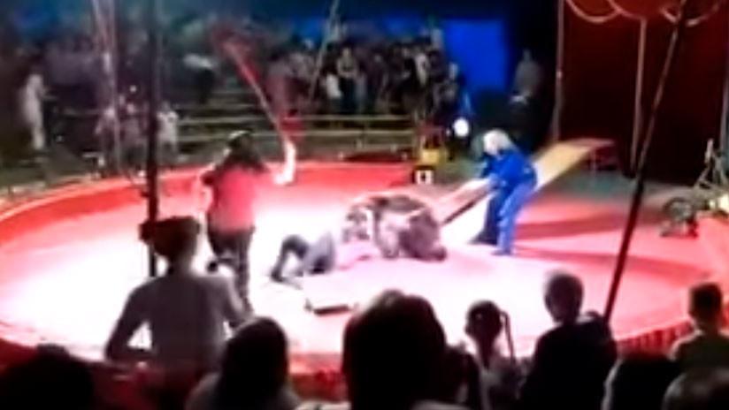 Feroz ataque de un oso al empleado de un circo