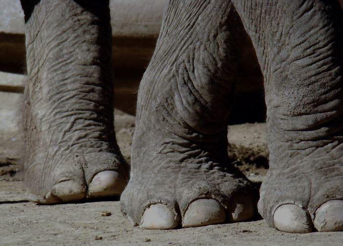 Un niño muere aplastado por un elefante en la India - Mundo Web
