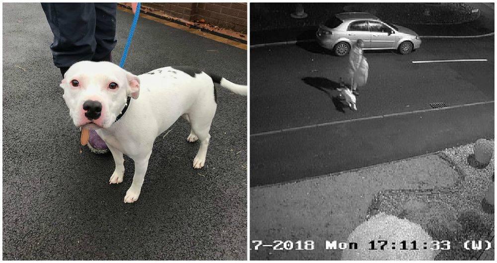 Video de abandono de un perro conmociona a la red